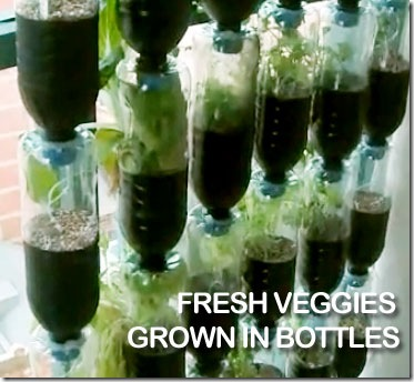 Gardening In Bottle : bottle garden