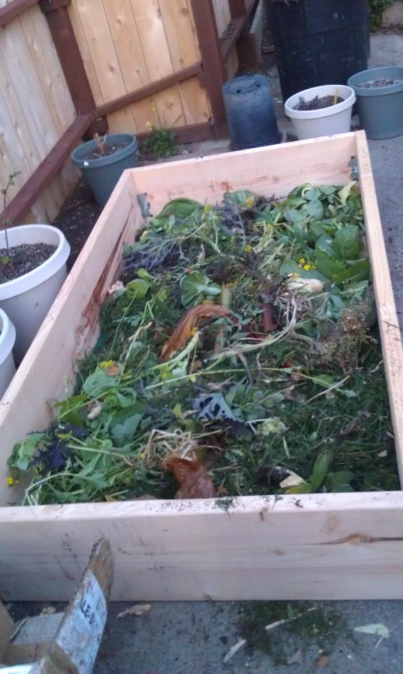 Vegetable Gardening Bed
