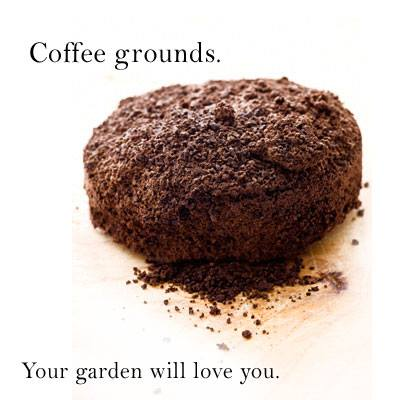 Coffee Grounds A Good Substitute For Manure In The Garden Gardengal Bevy