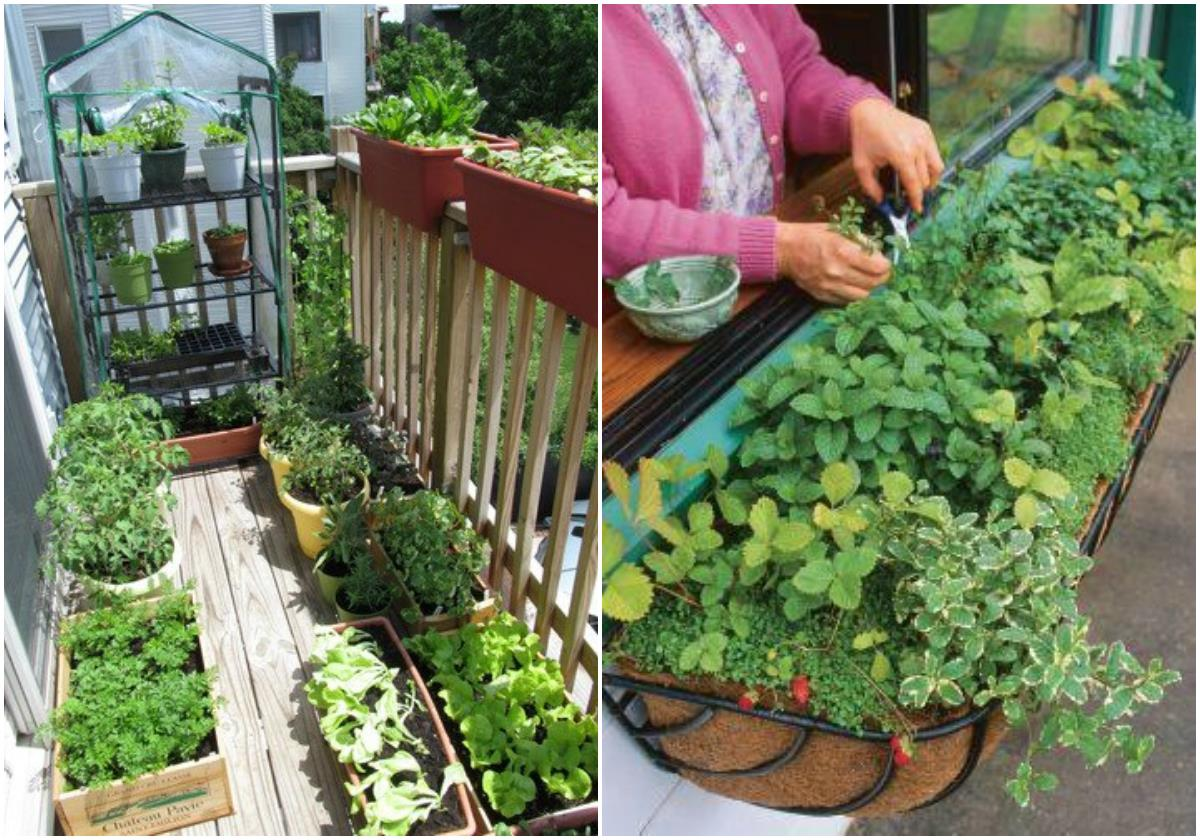 TIPS FOR STARTING AN APARTMENT GARDEN | Gardengal Bevy
