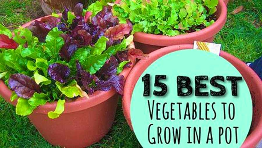 15 Best Vegetables To Grow In A Pot Gardengal Bevy