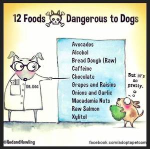 poison to dogs