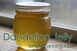 dandelion-jelly-500