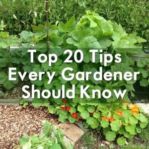 Top-20-Garden-Tips-