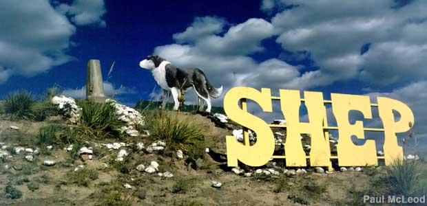 shep.jpg