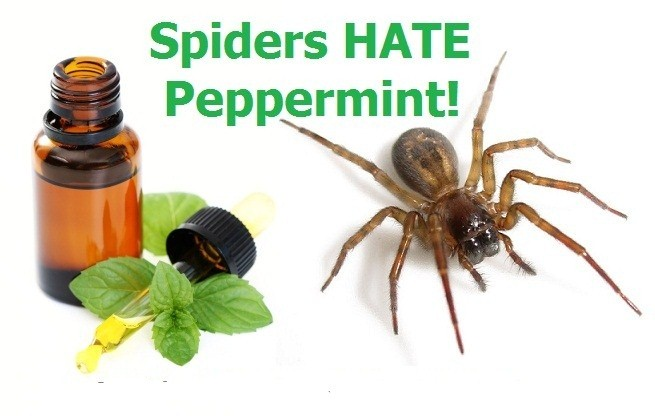 peppermint-spiders2.jpg
