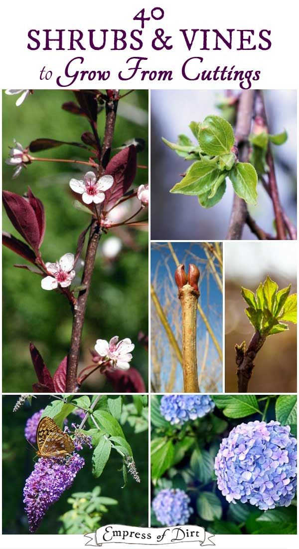 40-Shrubs-Vines-to-Grow-from-Hardwood-Cuttings-C1a
