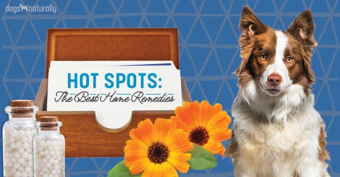 Hot-Spots-Email