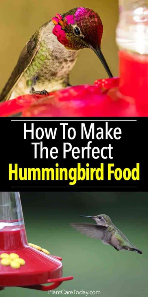 hummingbird-food-pinterest-735-1470-02282018-min-512x1024.jpg