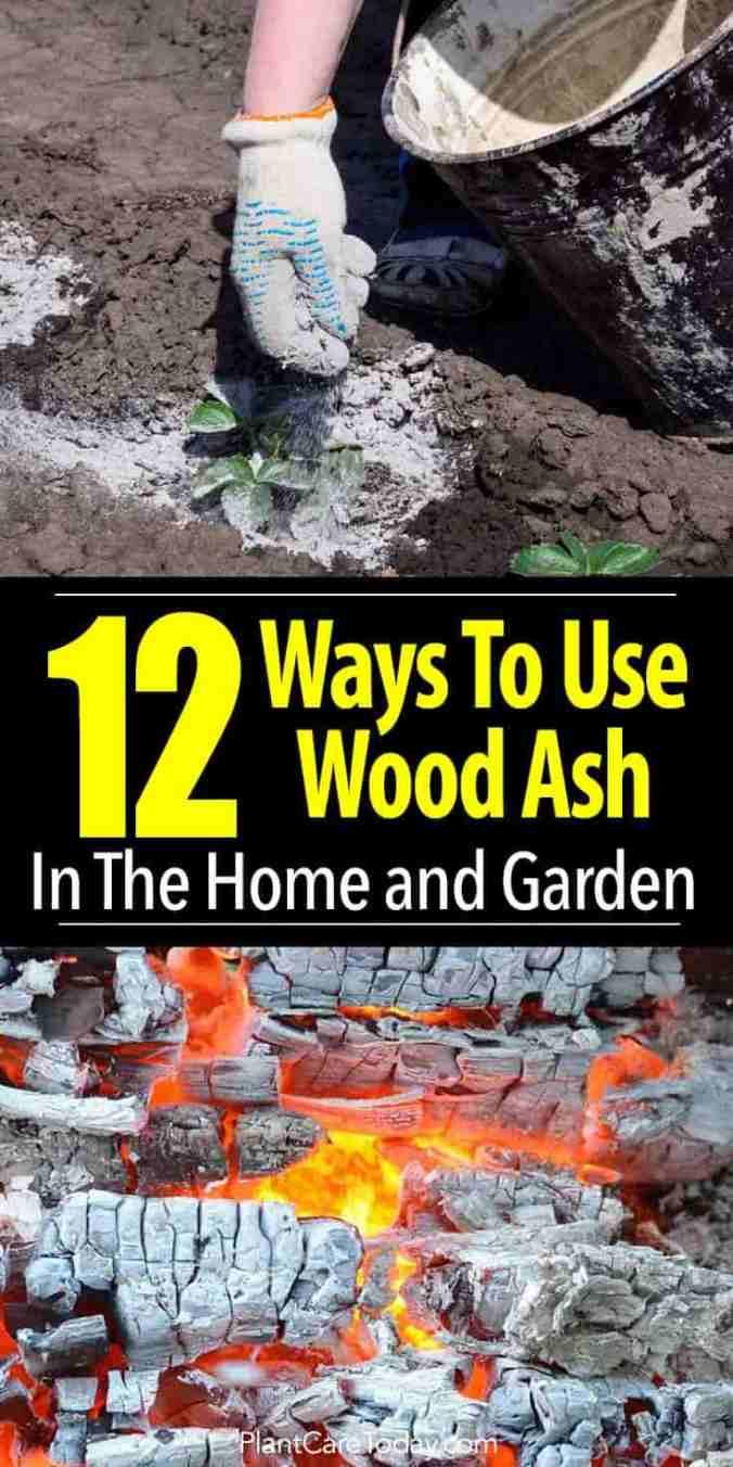 wood-ash-garden-pinterest-735-1470-02282018-min.jpg